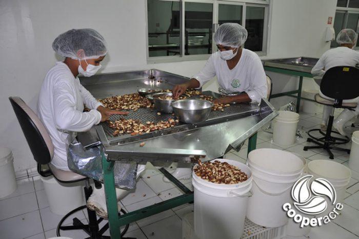 Produzindo castanhas